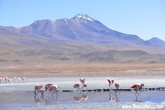 Cile & Bolivia