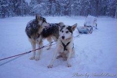 Finlandia (Lapponia)