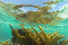 Sott'acqua: Belize