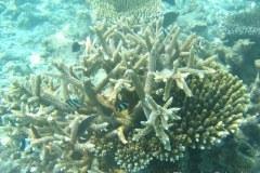 Sott'acqua: Maldive