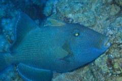 Sharm-2003-008