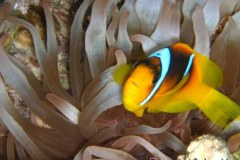 Sharm-2003-013