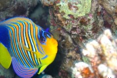 Sharm-2003-023
